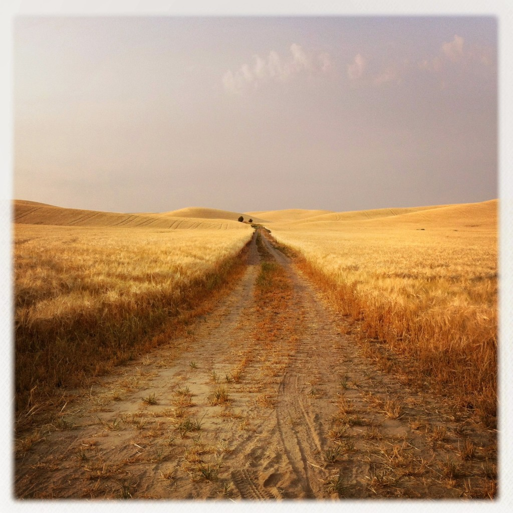 Wheat Road by Cecily Mariece Caceu
